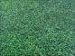 Коврик-пазл в виде газона 120*120 см 0